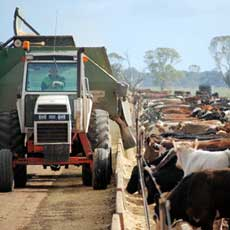 Southern Stockfeeds is a leading supplier of quality stockfeed to the dairy, beef, pork, sheep and poultry industries.